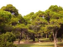 Δάσος Σχινιά