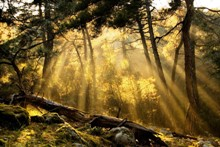 Δάσος Δαδιάς