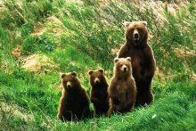 Αρκούδα με τα αρκουδάκια της