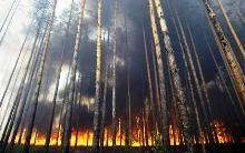 Πυρκαγιά στο δάσος