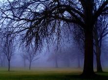 Ομίχλη..