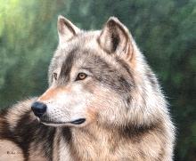 λύκος όργιο Έφηβος κανάλι γυμνό