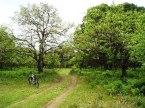 Δάσος Στροφυλιάς