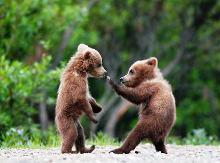 Αρκουδάκια