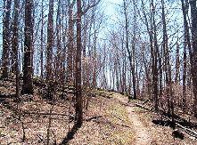 Καμμένο Δάσος