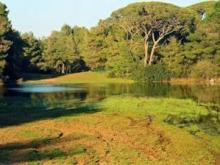 Εθνικό Πάρκο Στροφιλιάς