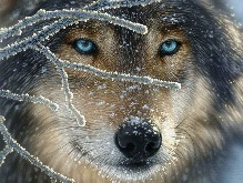 Λύκος
