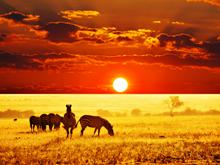 Αφρικανική σαβάνα