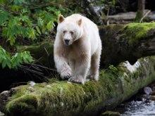To Πνεύμα της Αρκούδας