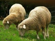 Πρόβατα ξυπνάτε...