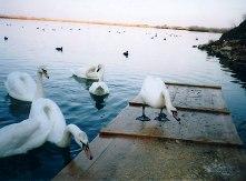 Λίμνη Μουστού