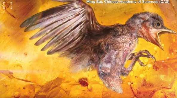Απολίθωμα πουλιού